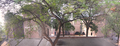 Iima oldcampus tree.png