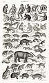 Illustration from A History of the Earth and Animated Nature by Oliver Goldsmith from rawpixel's own original edition of the publication 00013.jpg