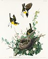 Illustration from Birds of America (1827) by John James Audubon, digitally enhanced by rawpixel-com 137.jpg