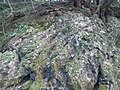 Ishiyama-dera Temple - Rock with moss.jpg