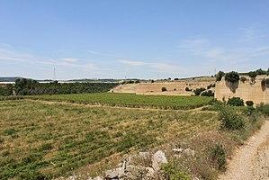Bombino nero - Most ampelographers believe Bombino nero and Bombino bianco probably originated in Apulia (vineyard there pictured)