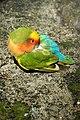 Italy-02044 - Little Beauty (22791704892).jpg