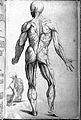 J. Tinney, Compendium anatomicum...; male ecorche Wellcome L0027877.jpg