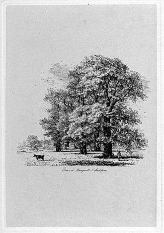Jacob George Strutt - Jacob George Strutt, Elms at Mongewell, Oxfordshire