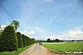 Japan - Gunma, Showa 2010 (4881647911).jpg