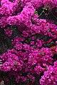 Jardim Botânico da Madeira DSC 0240 (14719892623).jpg