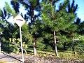 Jardim Mutinga, Barueri - São Paulo - panoramio (7).jpg