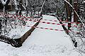 Jardin naturel (Paris) sous la neige 25.jpg