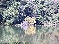 Jd. Botânico2 - panoramio.jpg