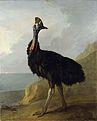 Jean-Baptiste Oudry - Cassowary (1745).jpg