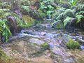 Johnson Creek Right Branch, Murchison - panoramio.jpg