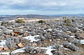 Joshua Tree National Park (24229613552).jpg