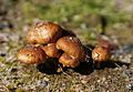 Jyväskylä - fungi 8.jpg