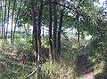 Kamionka, Mikołów, Poland - panoramio (45).jpg
