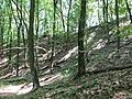 Kaniv Nature Reserve (May 2018) 92.jpg