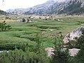 Kerrick Meadow - panoramio - Kurt Minard (7).jpg