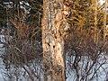 Kerry Wood Nature Conservatory (32599566660).jpg