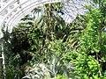Kew Garden Temperate House (3656143961).jpg