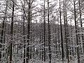 Kiyomicho Kamiodori, Takayama, Gifu Prefecture 506-0206, Japan - panoramio.jpg
