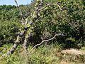 Knudshoved Odde - panoramio (13).jpg