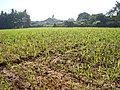 Kodinar, Gujaratt - India (3417887130).jpg