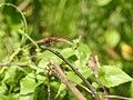 Kole Odonata Survey 2019 07.jpg