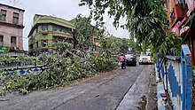A downed tree along the side of a Kolkata street