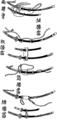Koshiate (Sword Hangers).png