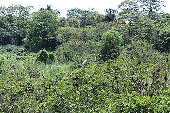 Kumarakam Bird Sanctuary, Kerala, India.jpg
