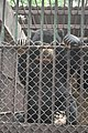 Kunming City Zoo Bear (9964731516).jpg