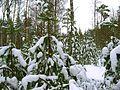 Līksna Parish, LV-5456, Latvia - panoramio - alinco fan (9).jpg