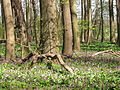 L14 Naturschutzgebiet Langes Holz - Radeland Lk Nordsachsen.JPG