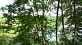 LSG Friedewald und Moritzburger Teichgebiet 30.JPG