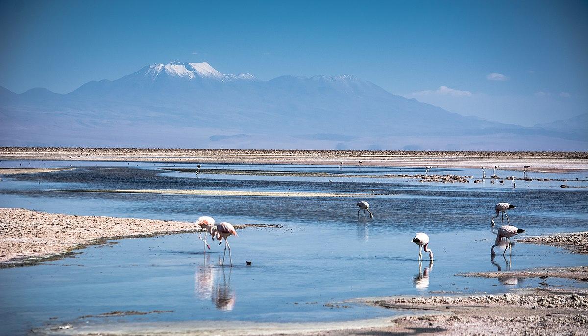 La bella Laguna Chaxa.jpg