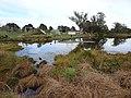 Lake Rotokaeo and Minogue Park playground.jpg