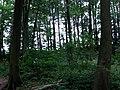 Landschaftsschutzgebiet Waldgebiete bei Dielingdorf und Handarpe LSG OS 00025 Datei 23.jpg