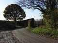 Lane below Cheek's Farm - geograph.org.uk - 282155.jpg