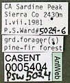Lasius niger casent0005404 label 1.jpg