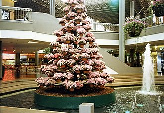 The Mall in Columbia - Poinsettia Tree c. 1979