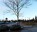 Leafless at the Trafford Centre - geograph.org.uk - 1075753.jpg