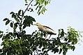 Leaves & Pond Heron I IMG 8642.jpg