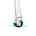 Left Metatarsal bones03 posterior view.png