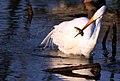 Leroy, WI, USA - panoramio - NaturesFan1226 (2).jpg