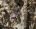 Linnaeite, Millerite-351914.jpg