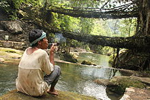 Living root bridges, Nongriat village, Meghalaya.jpg
