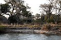 Livingstone, Zambezi river bank and elephant - panoramio.jpg