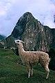 Llama in Machu Picchu-1.jpg