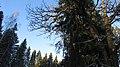 Lobnya, Moscow Oblast, Russia - panoramio (426).jpg