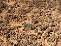 Lone Plant on Biological Soil Crust - Flickr - brewbooks.jpg