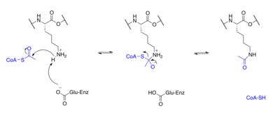 acetylation of salicylic acid 1 medicinal chemistry laboratory-i name of the experiment: synthesis of aspirin (acetyl salicylic acid) principle: salicylic acid (o-hydroxybenzoic acid) upon acetylation yields salicylic acid or aspirin phenols, unlike amines cannot be acetylated satisfactorily in aqueous solution acetylation proceeds readily with acidic.